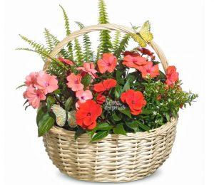 floraexpress цветочный подарок