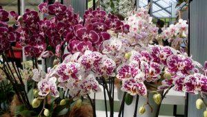 орхидеи с алиэкспресс