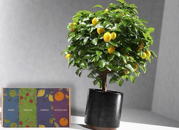 мини-дерево Экодар